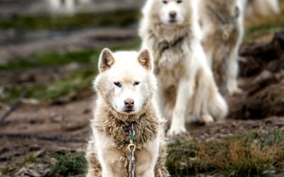 CWS 2019-02-18 Peter Ralston, Arctic Exploration. WATCH NOW!