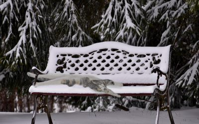 The Agony of Frozen Cats
